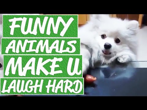 Funny animals compilation 2016 - Dog food catch fail, attacking monkeys, dancing parrot, cat attack
