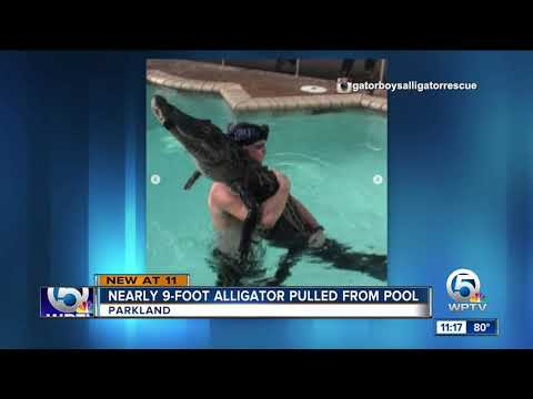 The Mo & Sally Show - Florida Man Pulls 9-Foot Gator Out Of A Pool