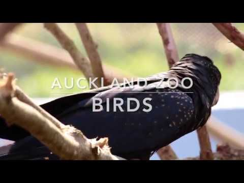 Birds   Auckland Zoo [Full HD]