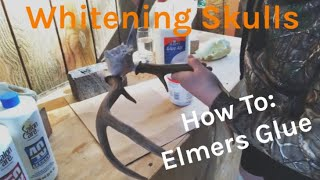 How To Whiten Animal Skulls | Elmers Glue