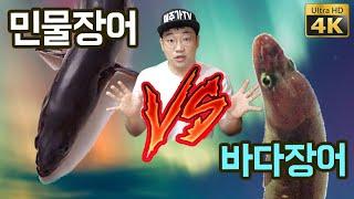 Freshwater eel vs seawater eel, Korean grill. (Korean food mukbang review) [ENG sub]