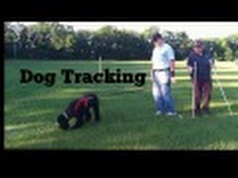 Dog Training | Standard Poodle Intro to Dog Tracking