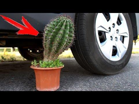 EXPERIMENT: CAR VS CACTUS