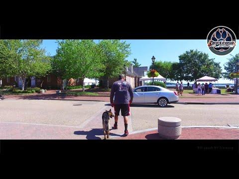Max 10 month Old German Shepherd, Agressive Behavior Modification, Northern Virginia Dog Trainers