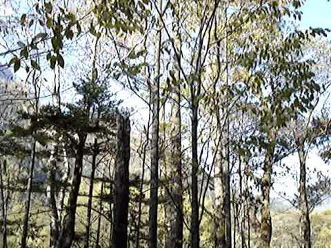 上高地林間散步 5
