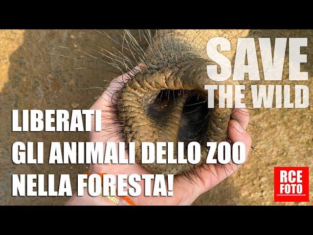 10 gennaio 2021 - Liberati gli animali dello zoo nella foresta