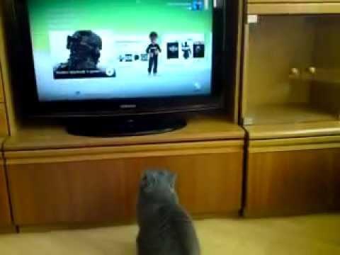 Katze basht meinen Avatar