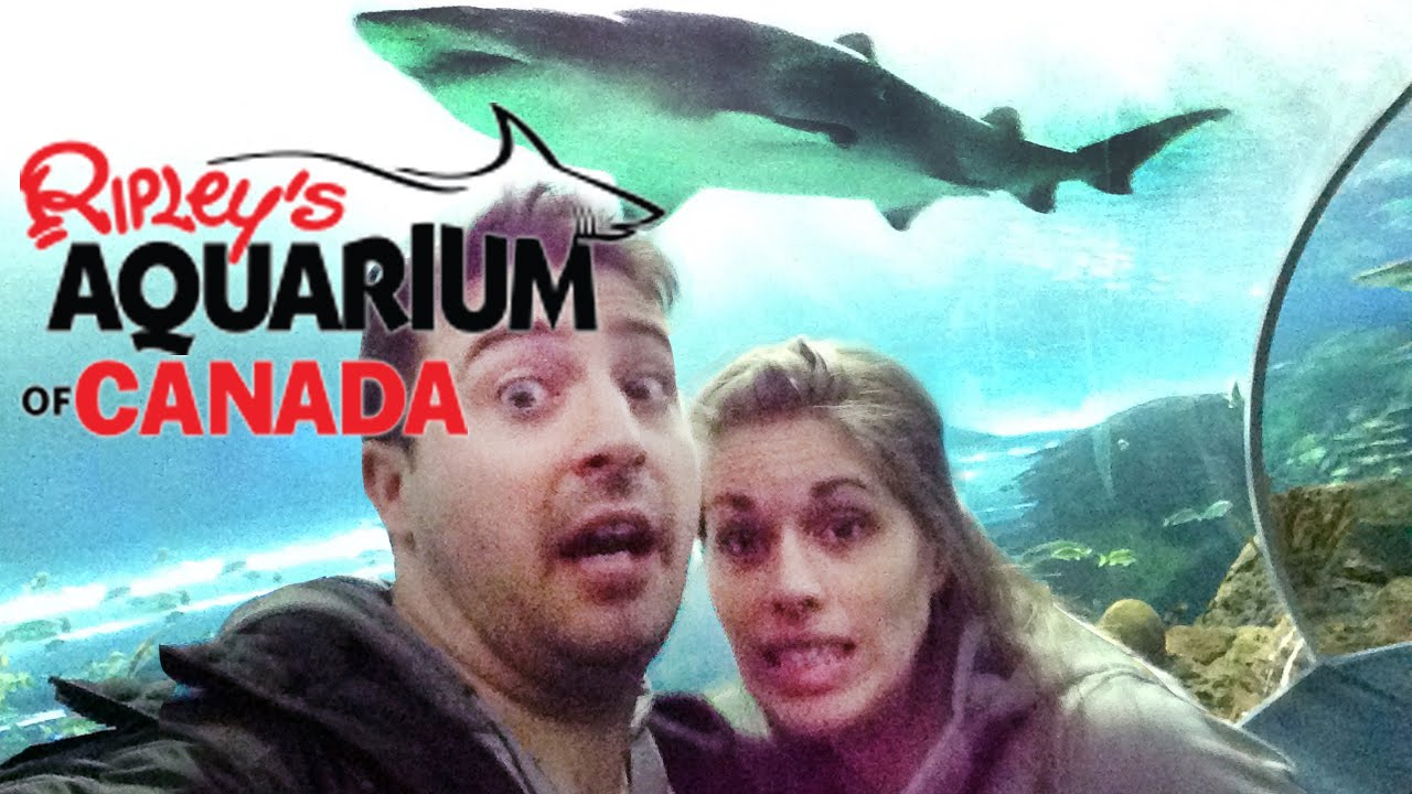Fish aquarium in canada - Ripley S Aquarium Of Canada Tour Fish Murder Too Toronto Ontario