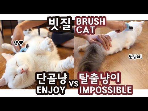 고양이 빗질: 단골냥이 vs 탈출냥이 BRUSH CATS: ENJOY vs IMPOSSIBLE