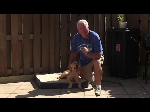 Teach your dog The BED command!  ( Using Positive Dog Training )