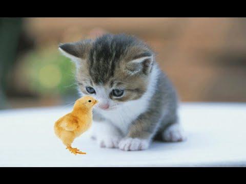 Unduh 68+  Gambar Kucing Persia Yang Lucu Imut HD