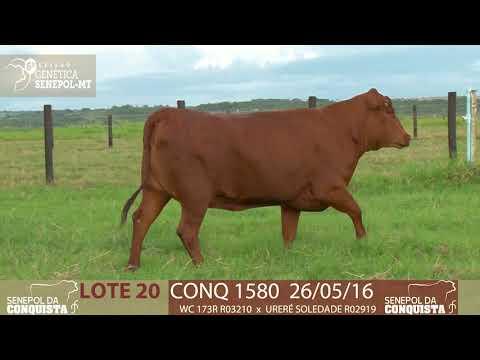 LOTE 20 CONQ 1580