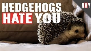 HEDGEHOGS HATE YOU!