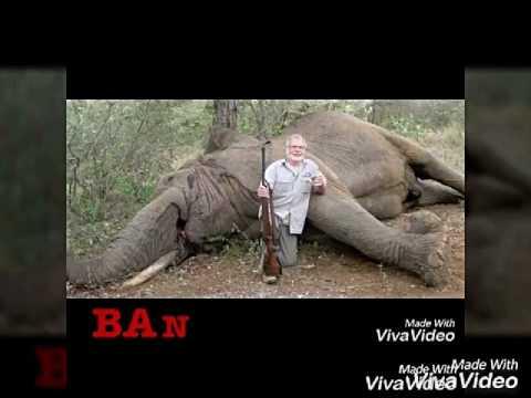 A voice against animal cruelity