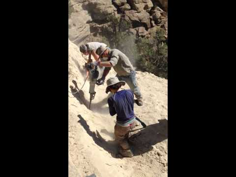 NCMNS and CNCC excavating duck bill dinosaur in Colorado