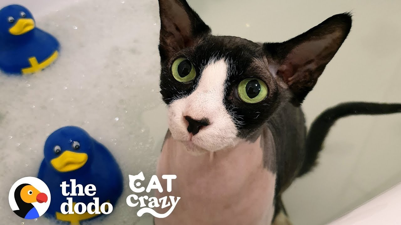 A Cat Who Is Obsessed With Water?!   The Dodo Cat Crazy