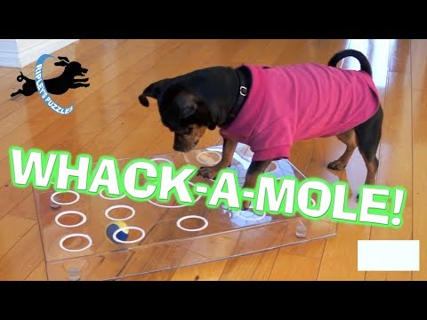 Ripley Plays Whac-A-Mole! | A New Fetch Puzzle Dog Game
