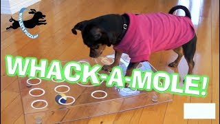 Ripley Plays WhacAMole!   A New Fetch Puzzle Dog Game