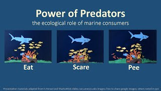 The Power of Predators with Dr Enie Hensel