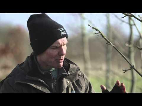 Enriched biochar suppresses ash dieback in UK trial – Dr Glynn Percival