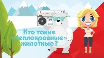 Узнай-ка кто такие теплокровные? - Развивающие мультфильмы Познавака (34 серия, 1 сезон)