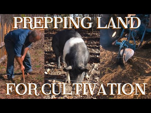Preparing Land for Cultivation with Hand Tools, Pigs, and Plows - The FHC Show, ep 15