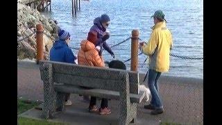 4.8M earthquake shakes southern Vancouver Island