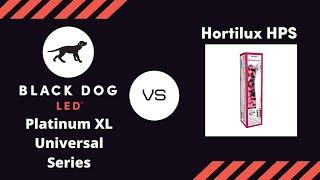 first 1000 watt hid vs led grow light timelapse   black dog led vs hortilux hps flowering mmj
