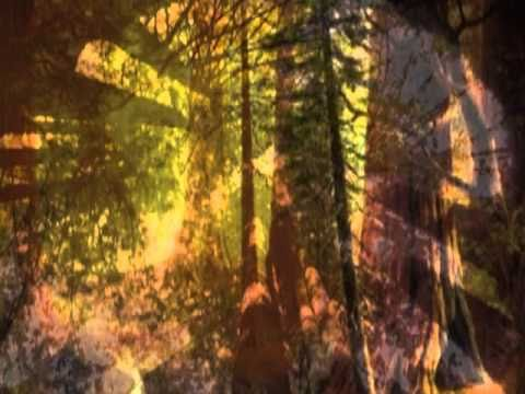 Walt Whitman/Leaves of Grass #9 : Song of the Redwood-Tree