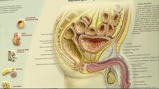 Nej till allmän prostatascreening - Nyheterna (TV4)