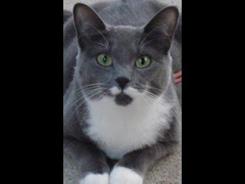 Cat playing with yarn (Bonus cat mustache)