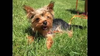 Puppy Enjoying Summer