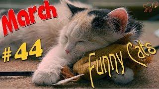 Спящие Коты 2014 март