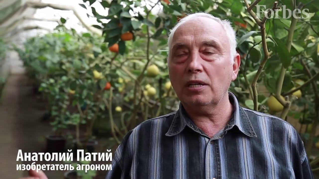25 сен 2015. Чтобы у нас в украине успешно выращивать, например, айву, кизил и другие экзотические как для наших широт растения, не нужно быть опытным садоводом. А что ну.