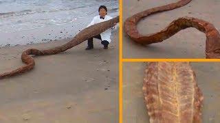 8 Загадочных существ выброшенных с океана на берег