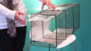 How Set Feral Cat Trap
