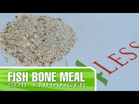 Fish Bone Meal - How To Apply And Why You Should Use It