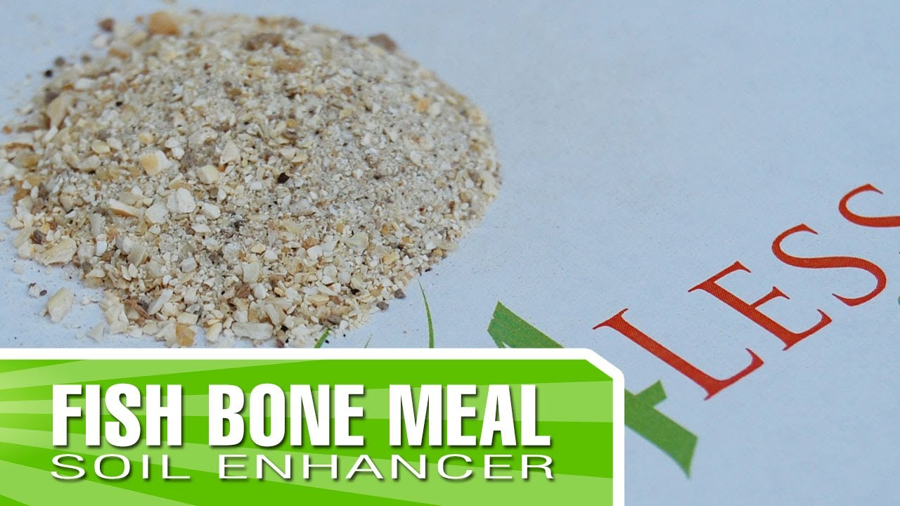 Fish bone meal how to apply and why you should use it for Fish bone meal