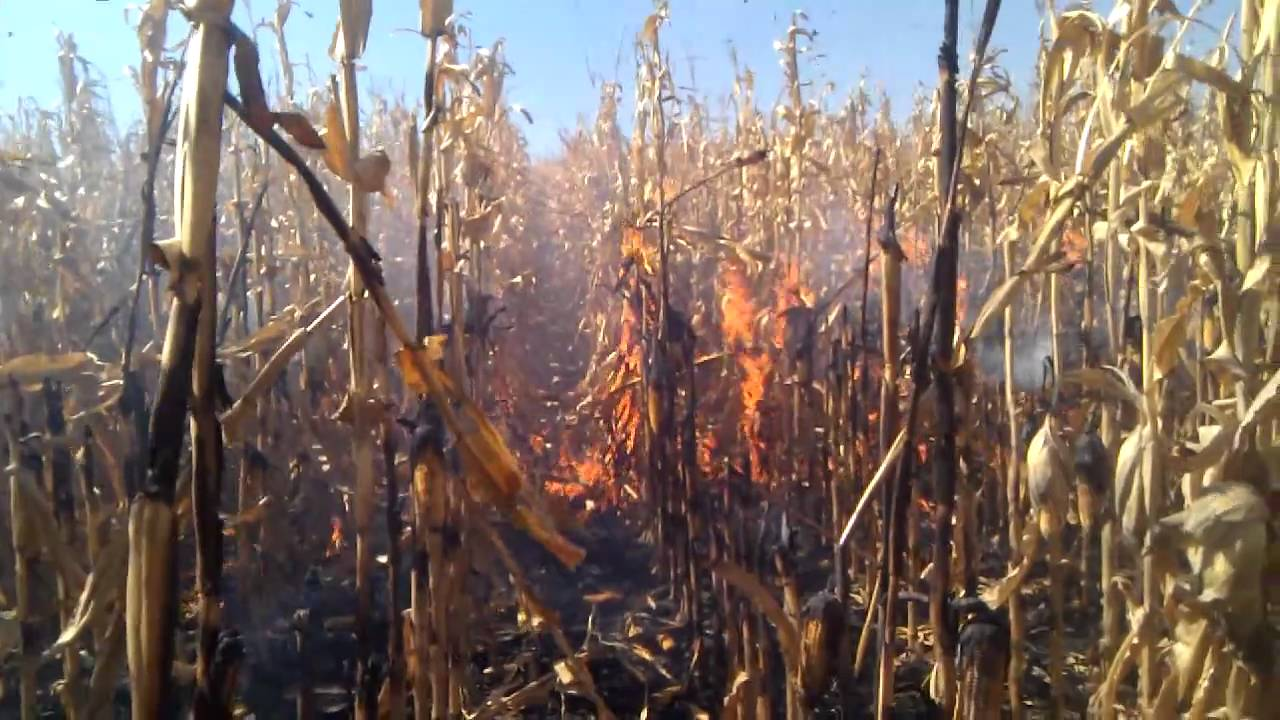 Image result for corn fire