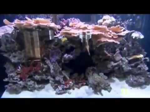 fish tank kings S1E5 Fish upon a star