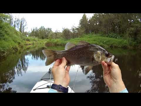 Back To Bassics - Aussie Bass - Hints, Tips And Action - Kayak Fishing