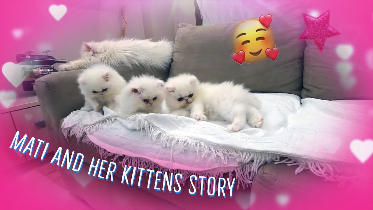 Mati and her kittens 35^:^
