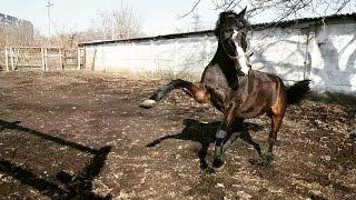 Казбич♥ Кузя♥ СДЮШОР Локомотив♥ ЛЕВАДА