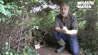 Wildlife Gadgetman - The Hog Box Trail Cam!