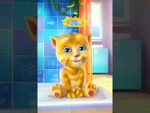 gatito ginger canta