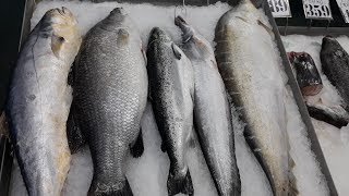Amazing Fishes in Largest Fish Market - Seafish Freshwater Fish River Fish