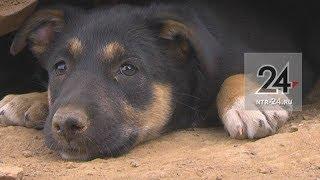 На детской площадке в Нижнекамске живут собаки