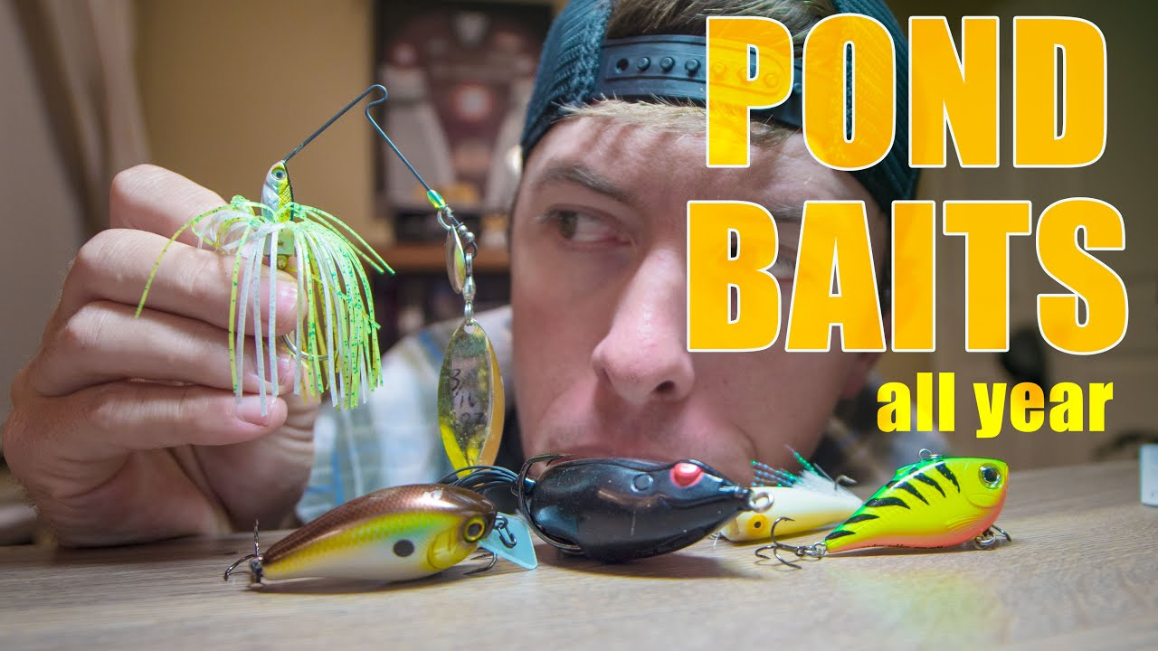best pond fishing baits to use year round youtube