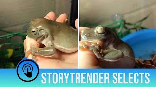 Frog tries to eat owner's finger