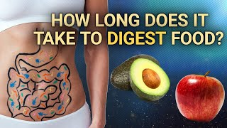 How Long Does iт Take to Digest Food | #DeepDives | Health